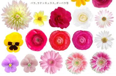 ブーケ作りに最適な花を知る