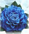 青バラのメリアブーケ